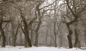 Deciduous Trees in Winter (left) and Spring (right) Photos from Wikimedia Commons